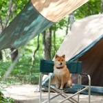 Going Camping with Your Dogs